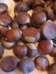 chestnut4